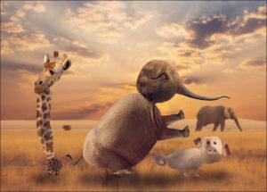 giraf_olifant_varken_fotokl